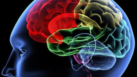 694940094001_1409784734001_640-brain